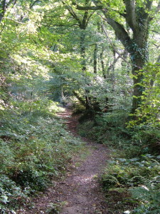 Path_through_Andrews_Wood_Nature_Reserve_-_geograph.org.uk_-_243029